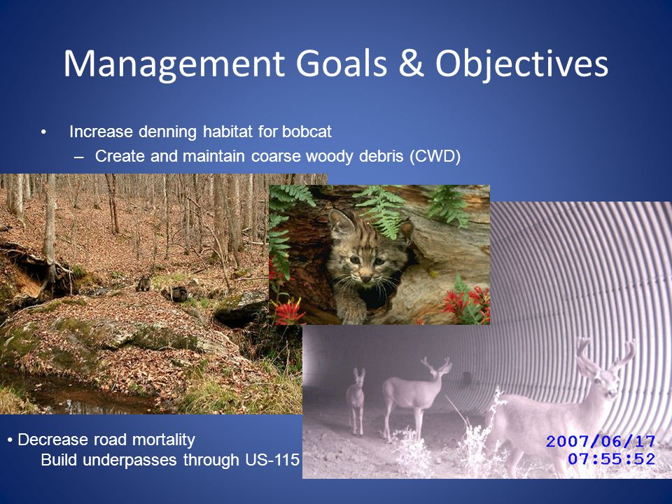 Management Goals & Objectives