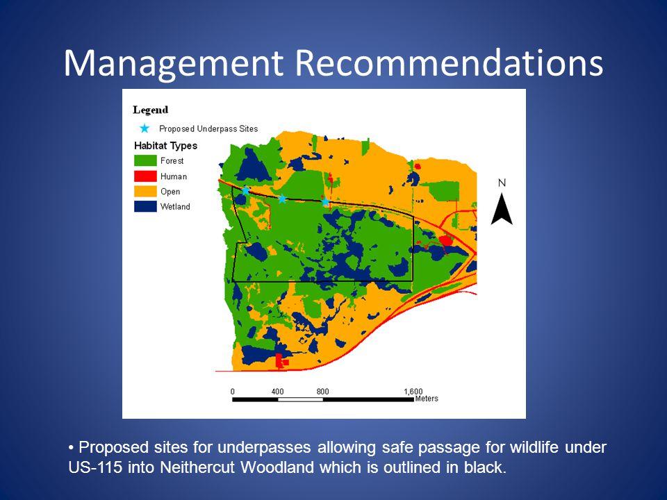Management Recommendations