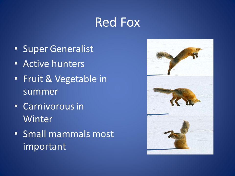 Red Fox Super Generalist Active hunters Fruit & Vegetable in summer