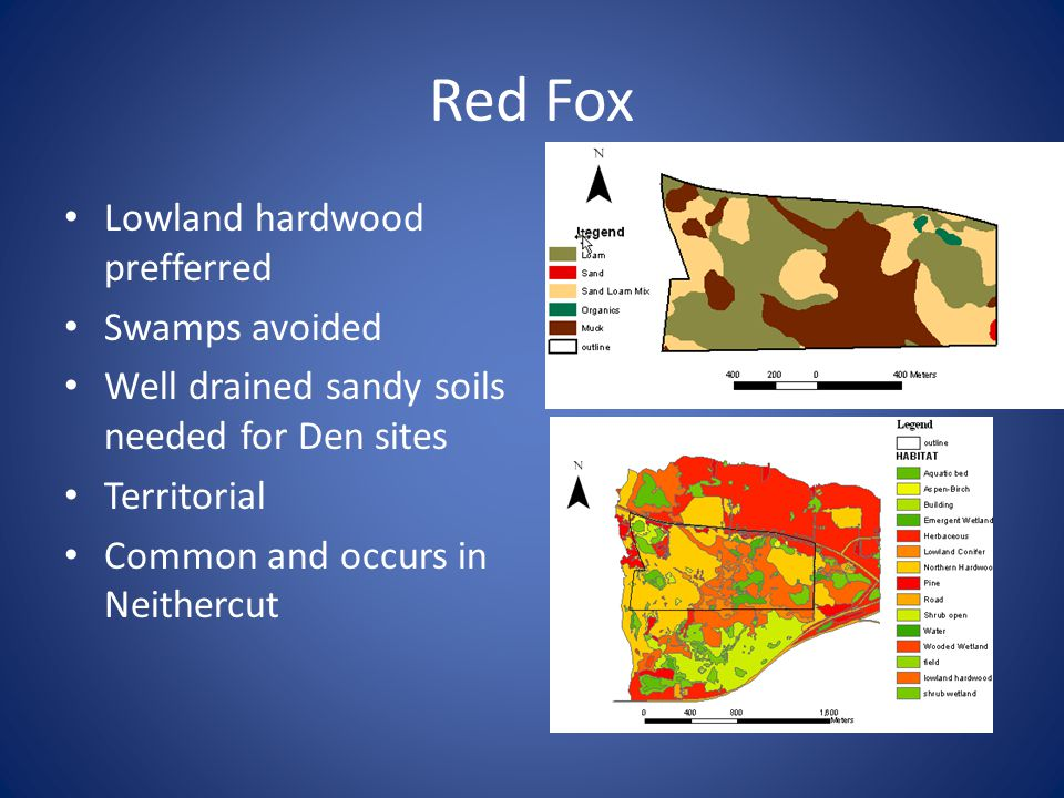 Red Fox Lowland hardwood prefferred Swamps avoided