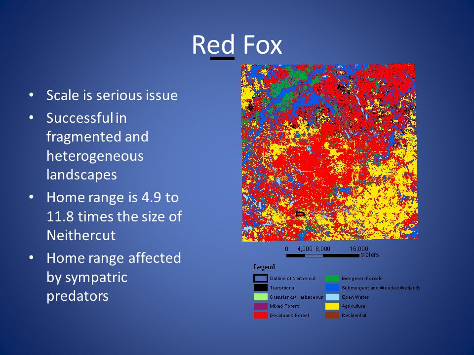 Red Fox Scale is serious issue