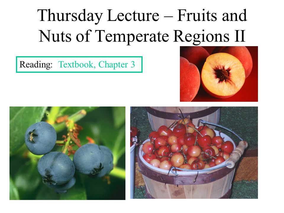 Thursday Lecture – Fruits and Nuts of Temperate Regions II