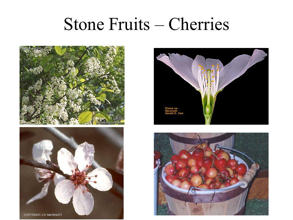Stone Fruits – Cherries