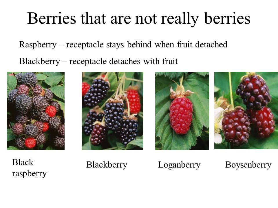 Berries that are not really berries