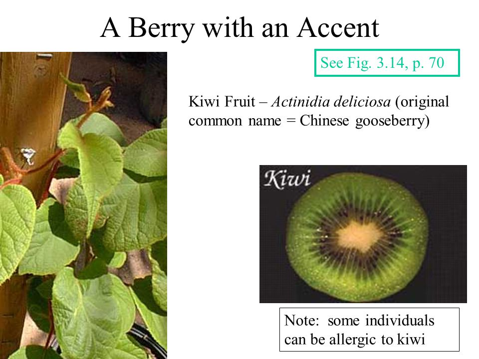 A Berry with an Accent See Fig. 3.14, p. 70