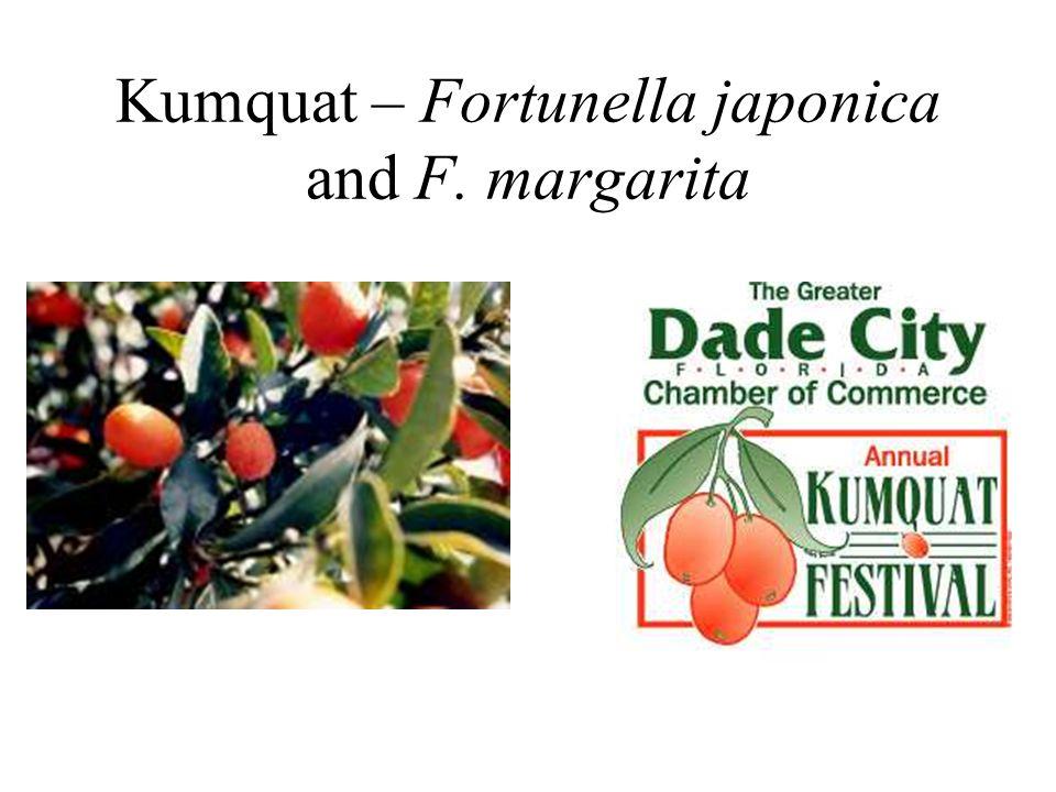 Kumquat – Fortunella japonica and F. margarita
