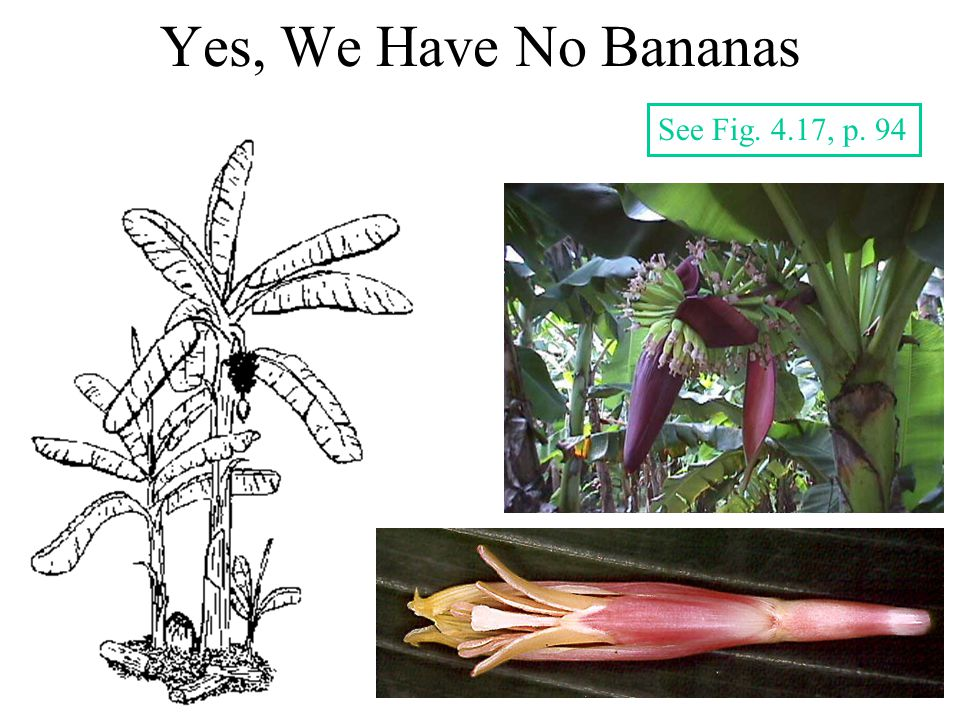 Yes, We Have No Bananas See Fig. 4.17, p. 94