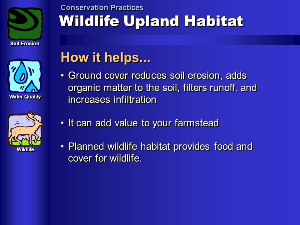 Wildlife Upland Habitat