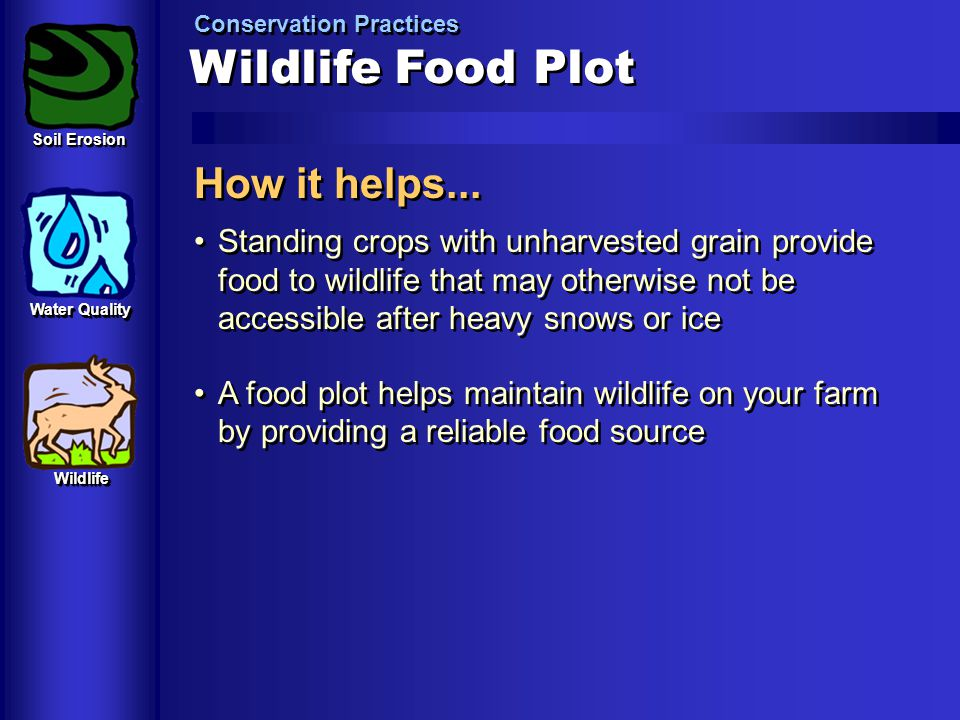 Wildlife Food Plot How it helps...