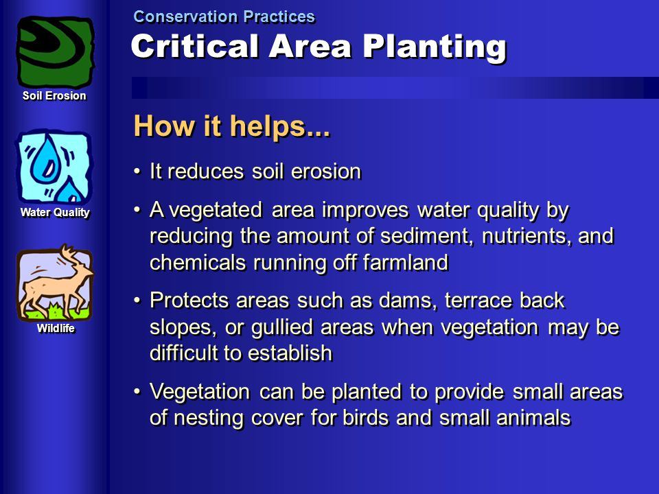 Critical Area Planting