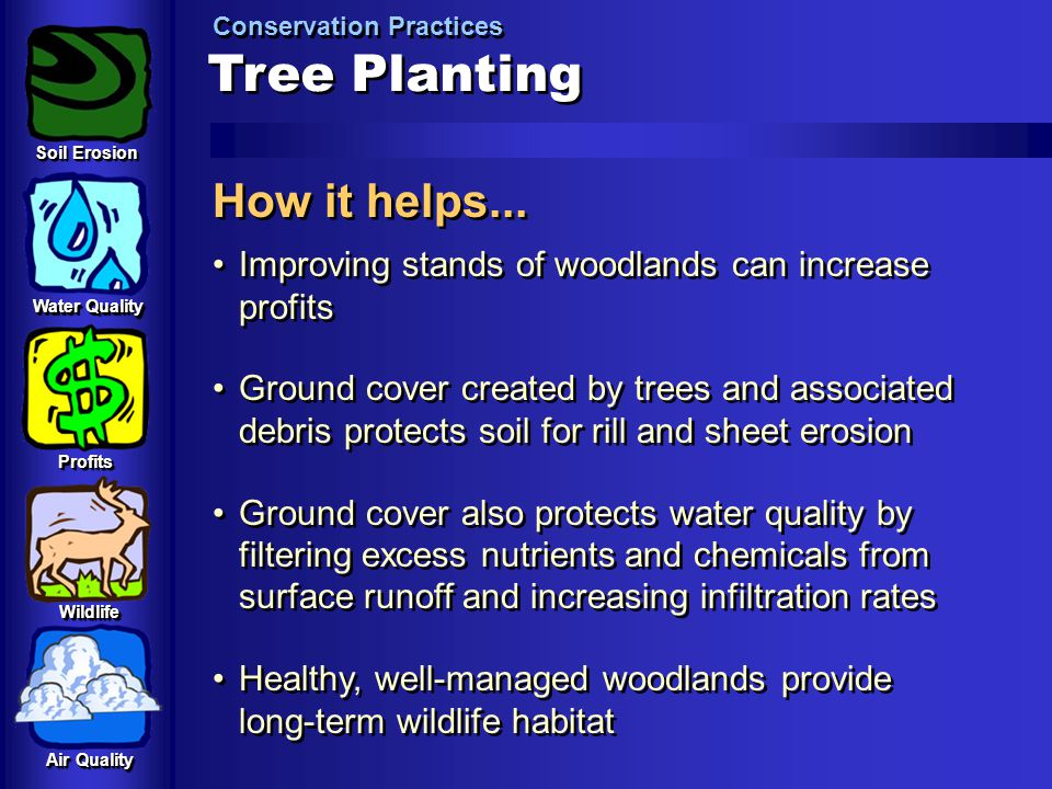 Tree Planting How it helps...