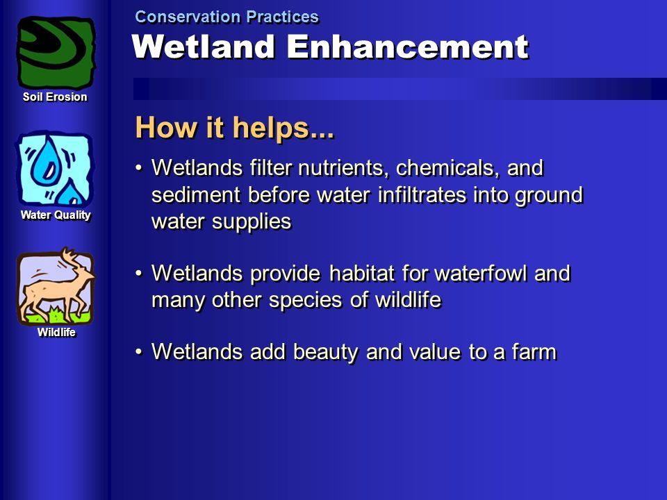 Wetland Enhancement How it helps...