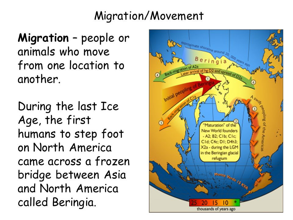 Migration/Movement Migration – people or animals who move from one location to another.