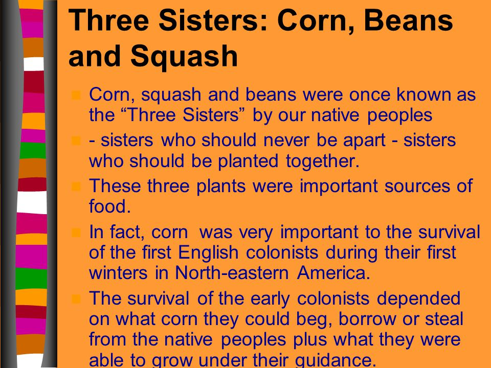 Three Sisters: Corn, Beans and Squash