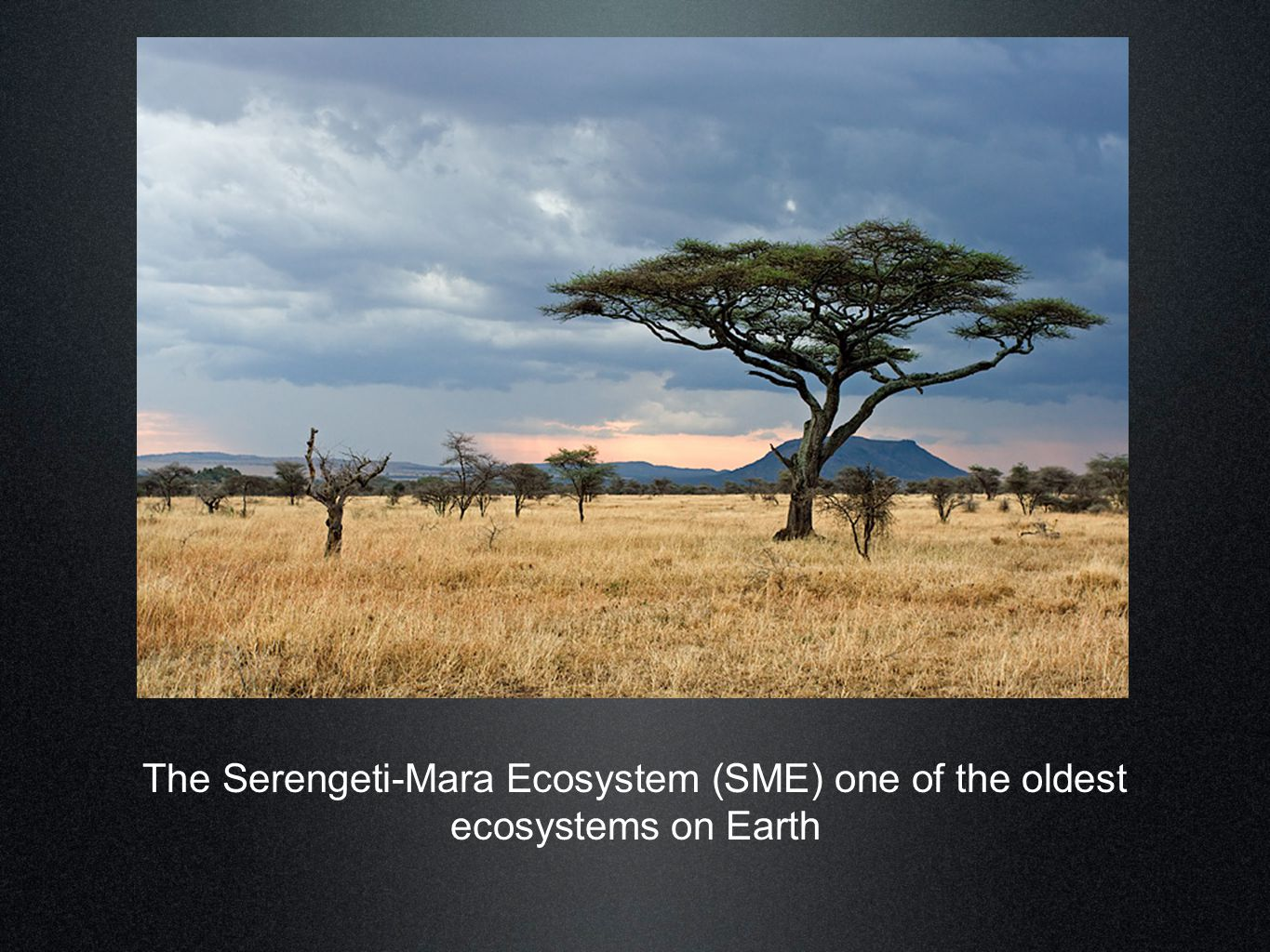 The Serengeti-Mara Ecosystem (SME) one of the oldest ecosystems on Earth