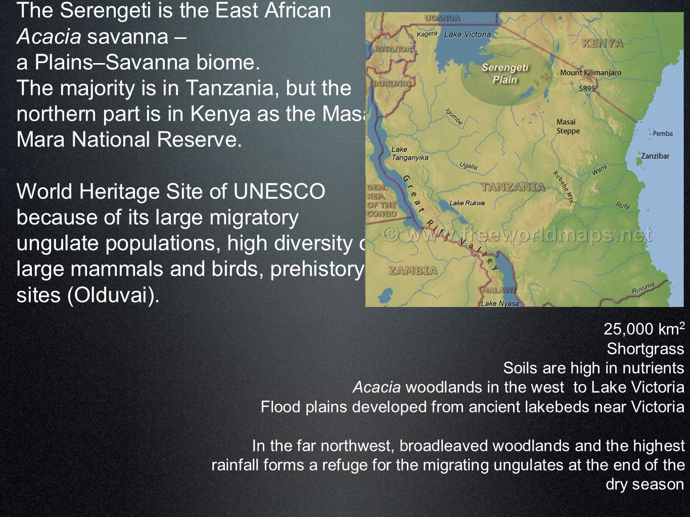 The Serengeti is the East African Acacia savanna – a Plains–Savanna biome. The majority is in Tanzania, but the northern part is in Kenya as the Masai Mara National Reserve. World Heritage Site of UNESCO because of its large migratory ungulate populations, high diversity of large mammals and birds, prehistory sites (Olduvai).
