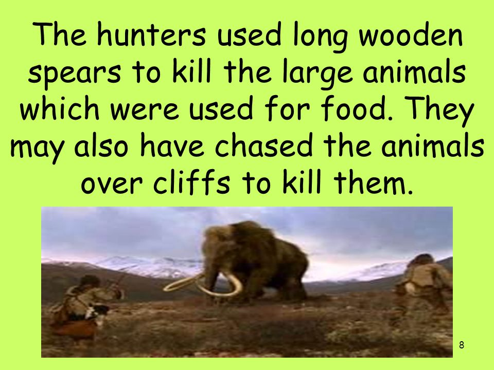 The hunters used long wooden spears to kill the large animals which were used for food.