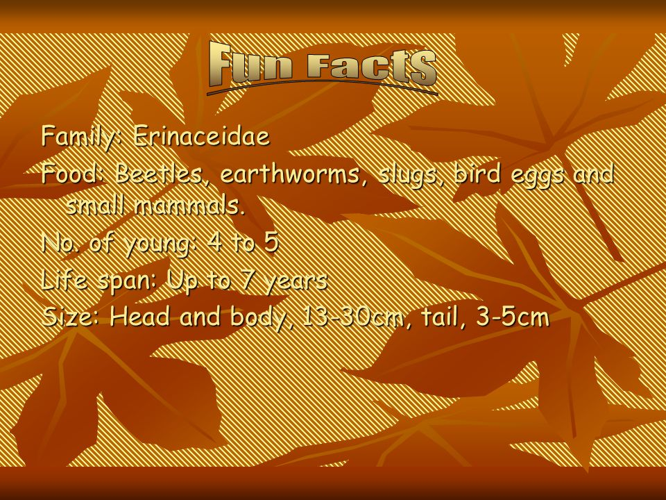 Fun Facts Family: Erinaceidae