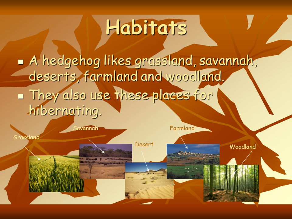 Habitats A hedgehog likes grassland, savannah, deserts, farmland and woodland. They also use these places for hibernating.