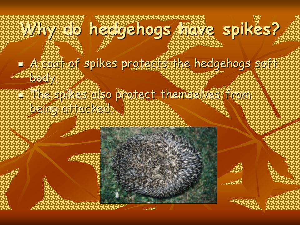 Why do hedgehogs have spikes