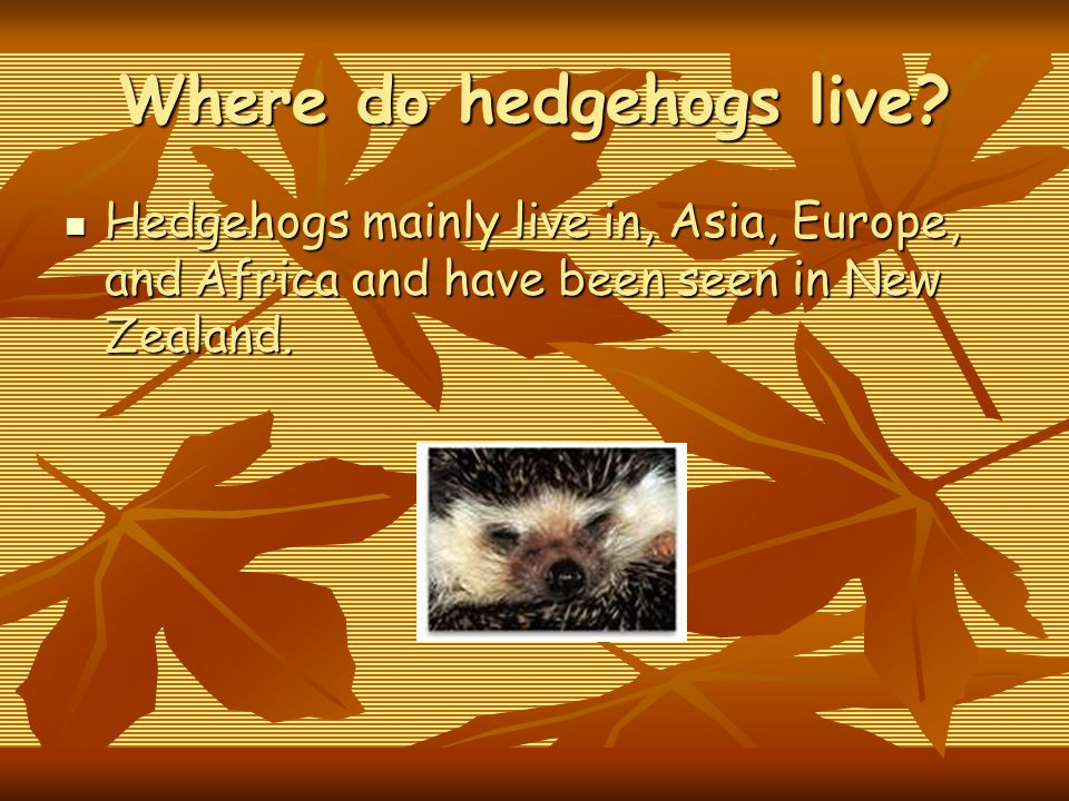 Where do hedgehogs live