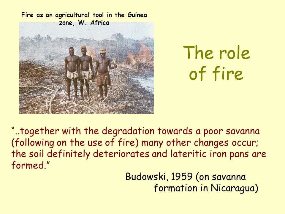 Fire as an agricultural tool in the Guinea zone, W. Africa