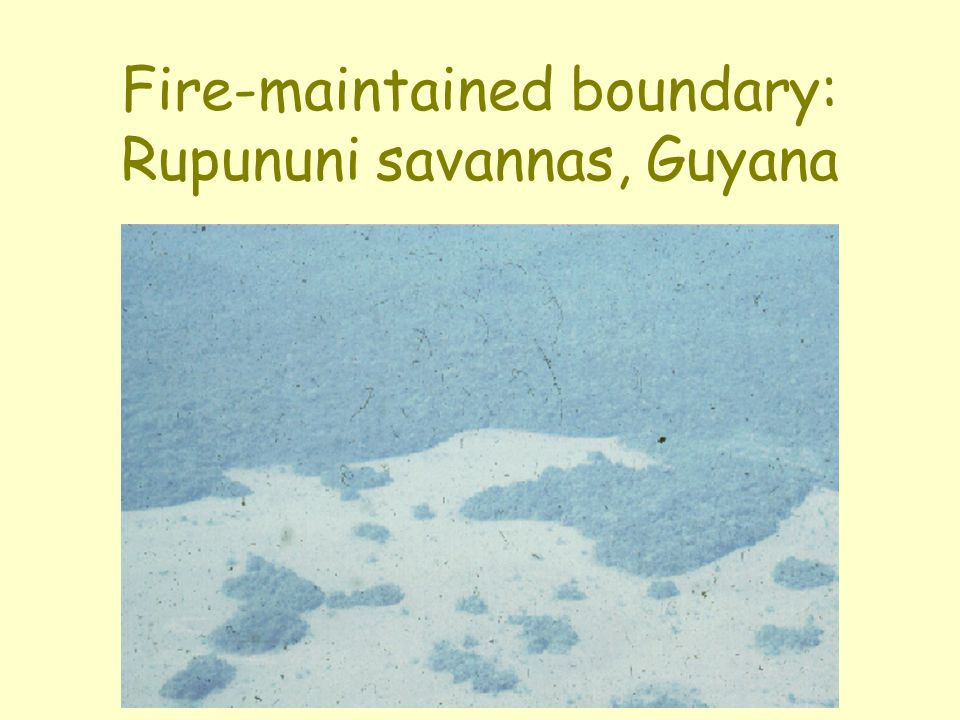 Fire-maintained boundary: Rupununi savannas, Guyana
