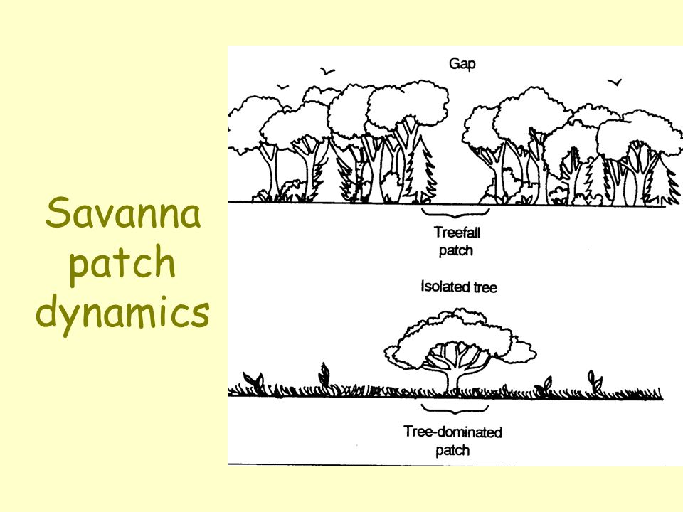 Savanna patch dynamics