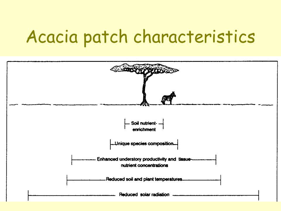 Acacia patch characteristics