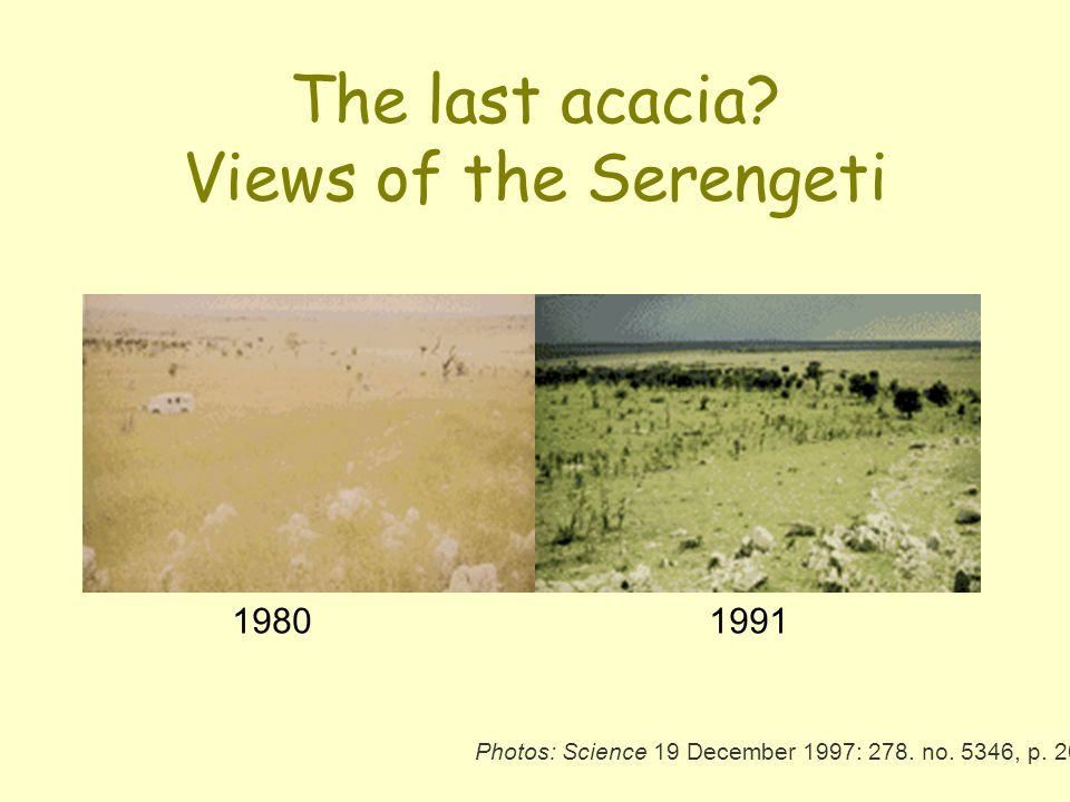 The last acacia Views of the Serengeti
