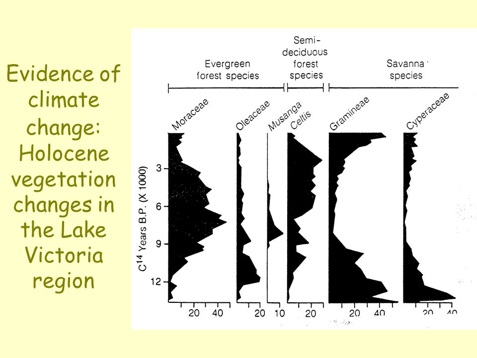 Evidence of climate change: Holocene vegetation changes in the Lake Victoria region