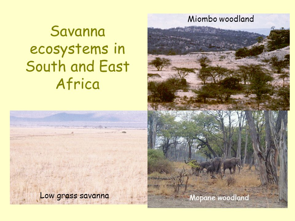 Savanna ecosystems in South and East Africa