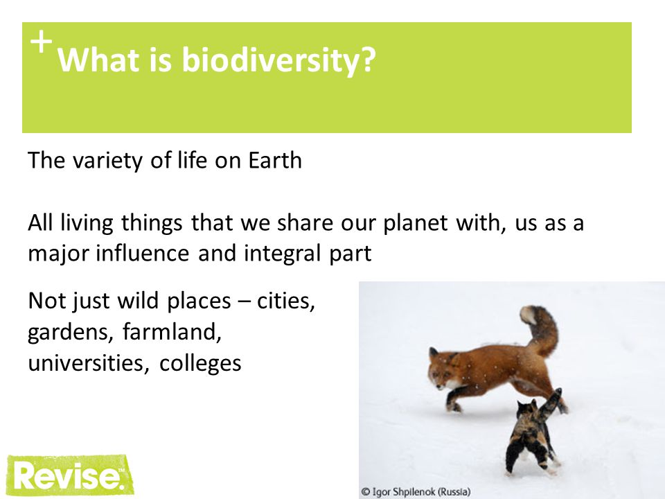 + What is biodiversity The variety of life on Earth