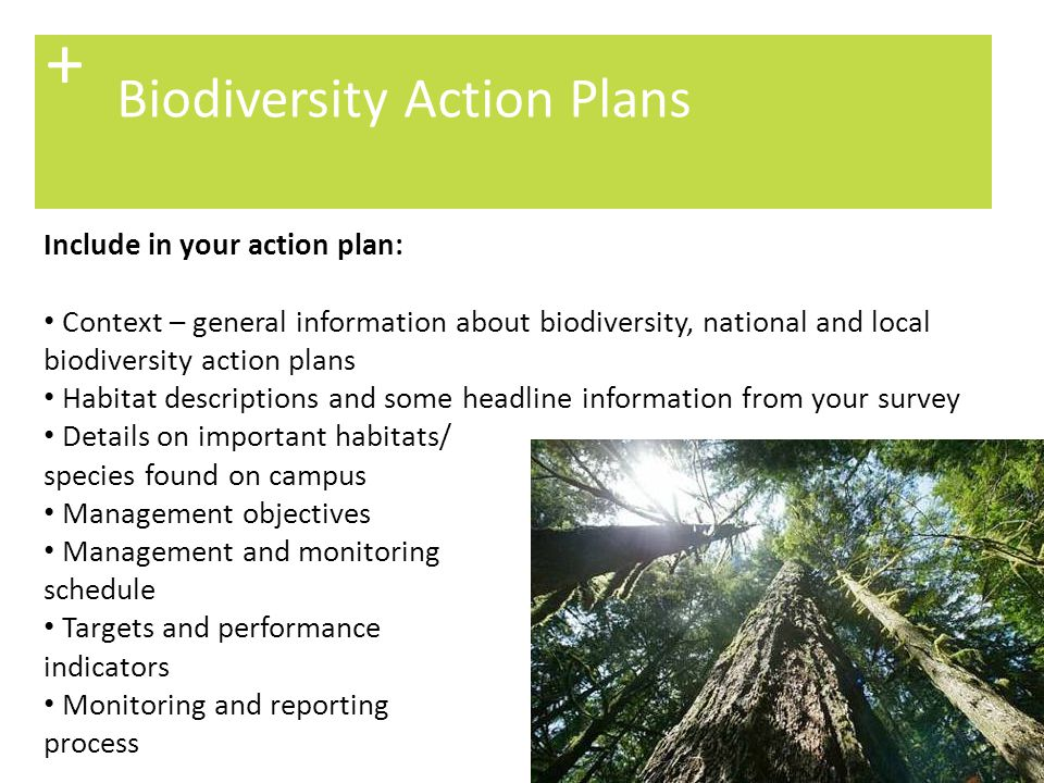 + Biodiversity Action Plans Include in your action plan:
