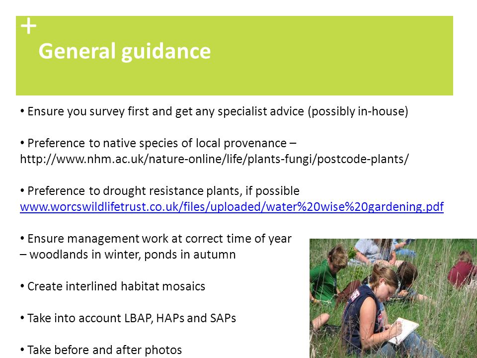 + General guidance. Ensure you survey first and get any specialist advice (possibly in-house) Preference to native species of local provenance –