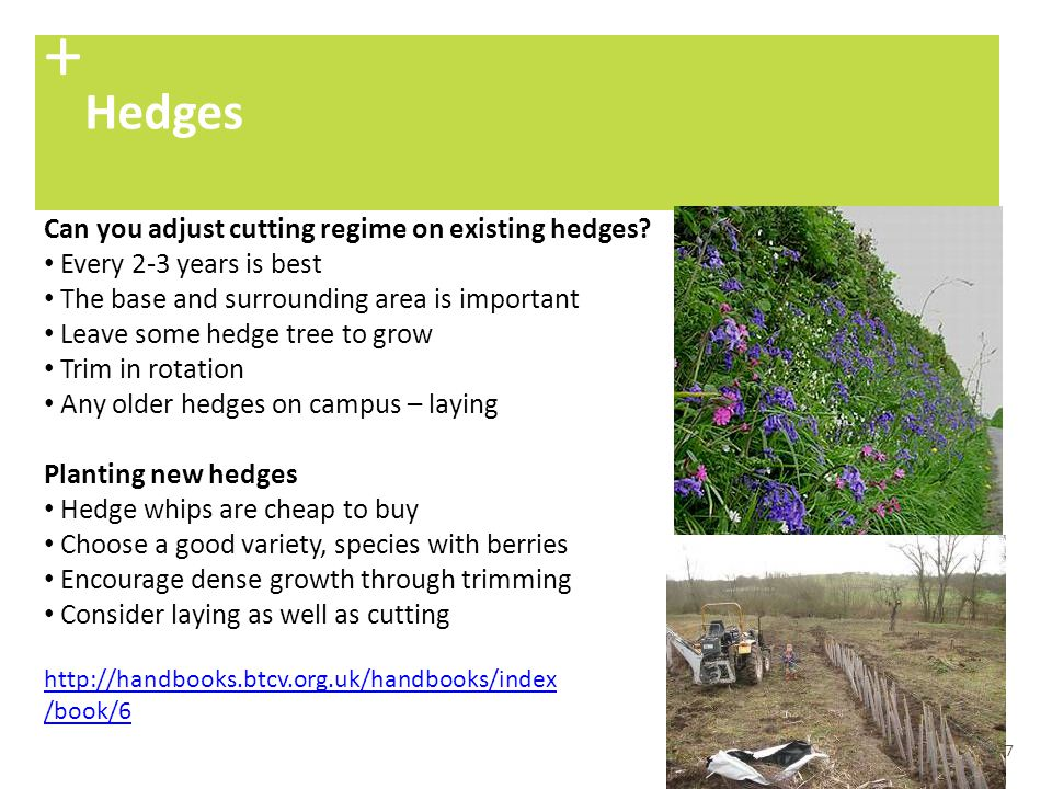 + Hedges Can you adjust cutting regime on existing hedges