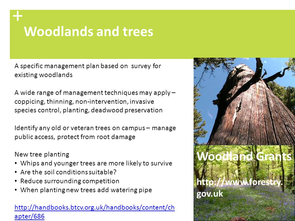 + Woodlands and trees Woodland Grants http://www.forestry. gov.uk