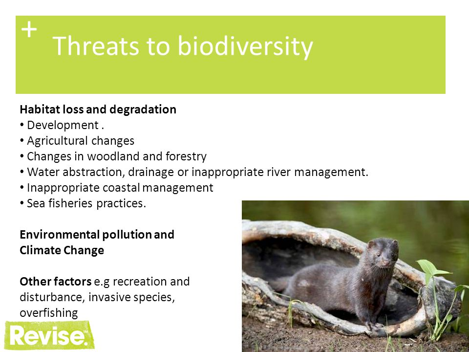 + Threats to biodiversity Habitat loss and degradation Development .