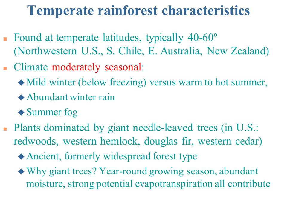 Temperate rainforest characteristics