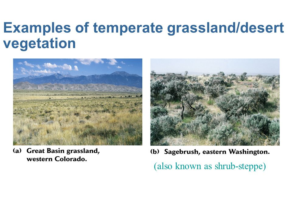 Examples of temperate grassland/desert vegetation