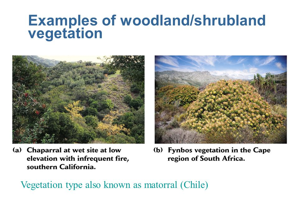 Examples of woodland/shrubland vegetation