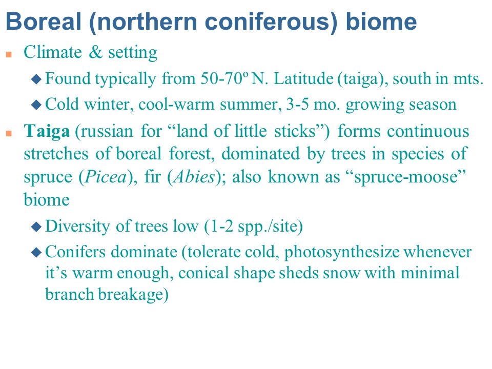 Boreal (northern coniferous) biome
