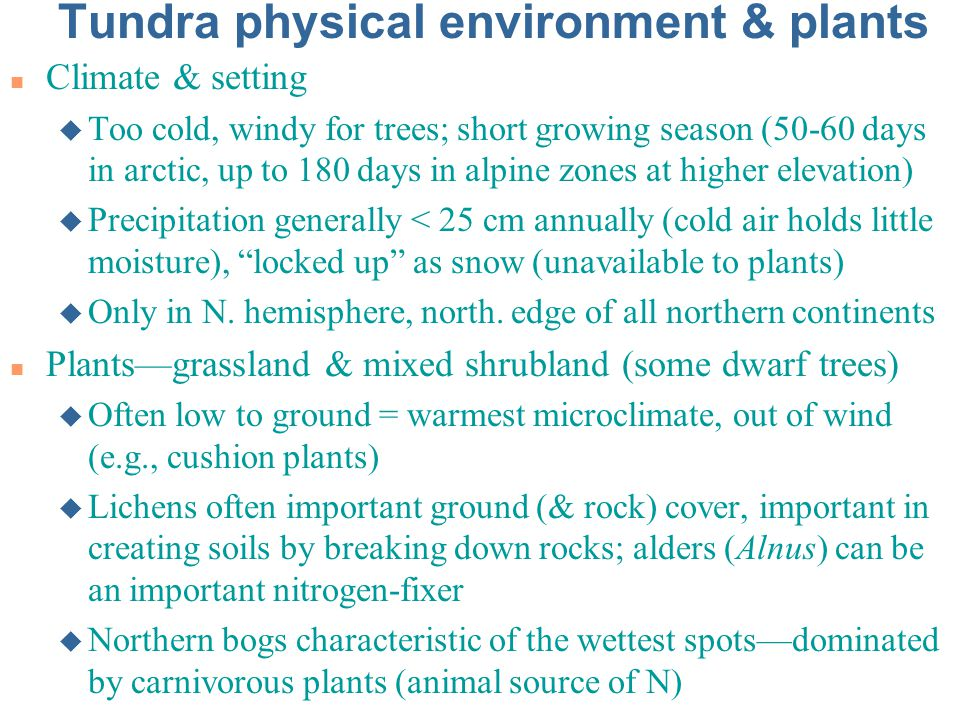 Tundra physical environment & plants