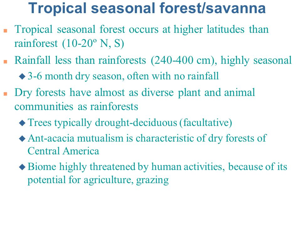 Tropical seasonal forest/savanna