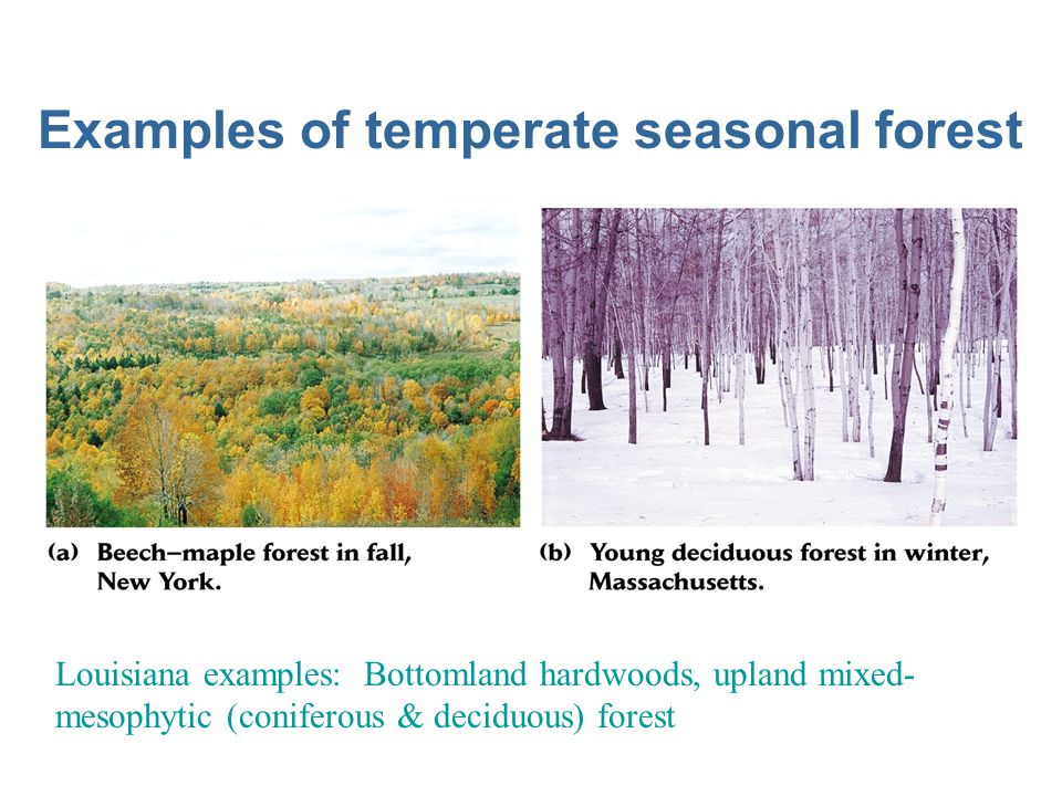 Examples of temperate seasonal forest