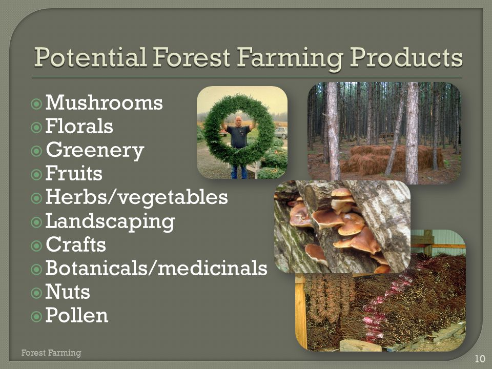 Potential Forest Farming Products