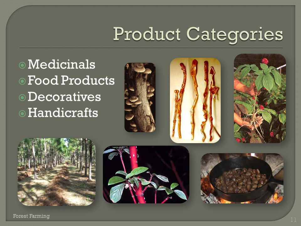 Product Categories Medicinals Food Products Decoratives Handicrafts