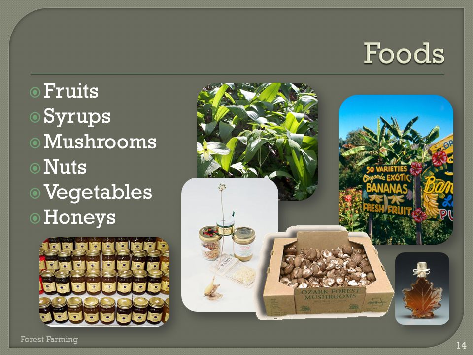 Foods Fruits Syrups Mushrooms Nuts Vegetables Honeys Forest Farming