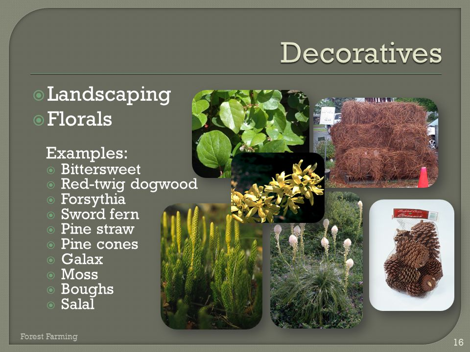 Decoratives Landscaping Florals Examples: Bittersweet Red-twig dogwood