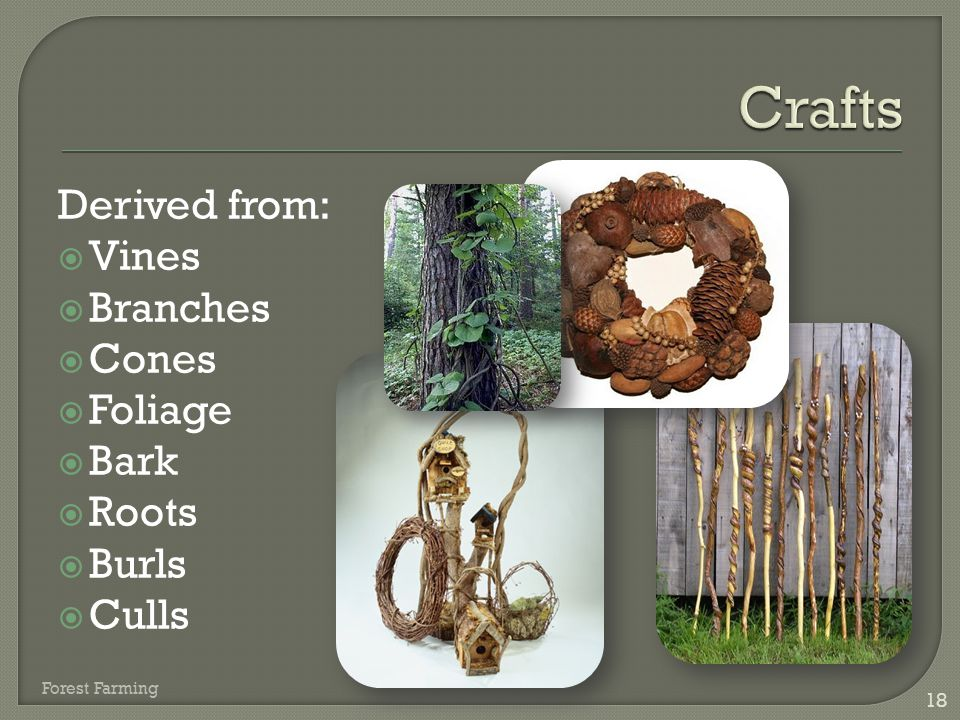 Crafts Derived from: Vines Branches Cones Foliage Bark Roots Burls